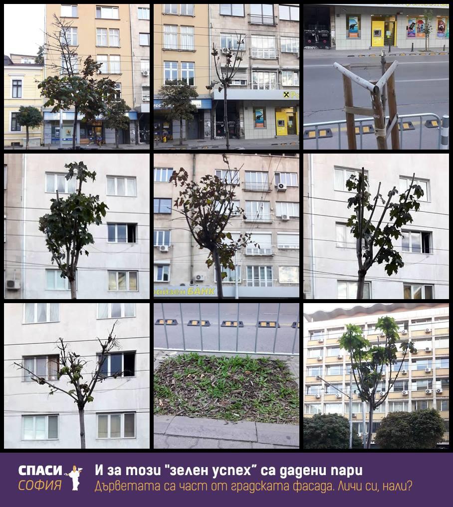 Поръчки за милиони – 2,5 млн. за цветя по време на криза 2